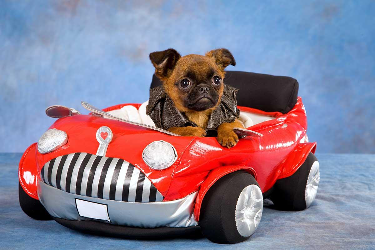 Pet Taxi Market Harborough